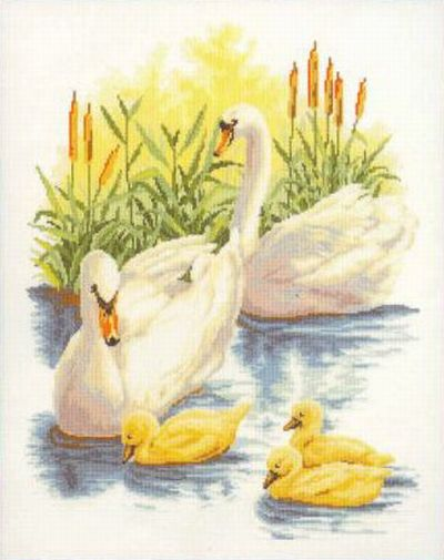 Swan Family on the River.