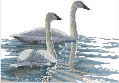 Лебеди Dimensions