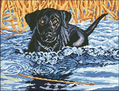 Собака с палкой в воде Dimensions