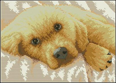 Золотистый щенок Dimensions
