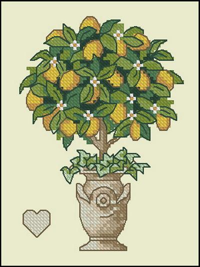 Цветы лимонное деревов горшке Dimensions