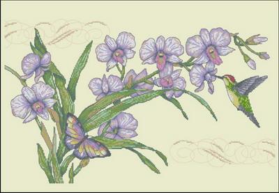 Цветы орхидеи Dimensions