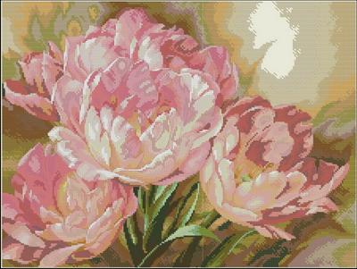 Tulip Trio — Gold Collection